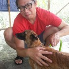 Jim Yeh volunteering at Kechara Forest Retreat, giving the dogs a good bath.